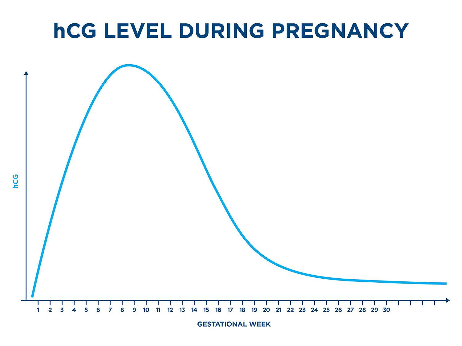 hCG levels: all you need to know - Clearblue